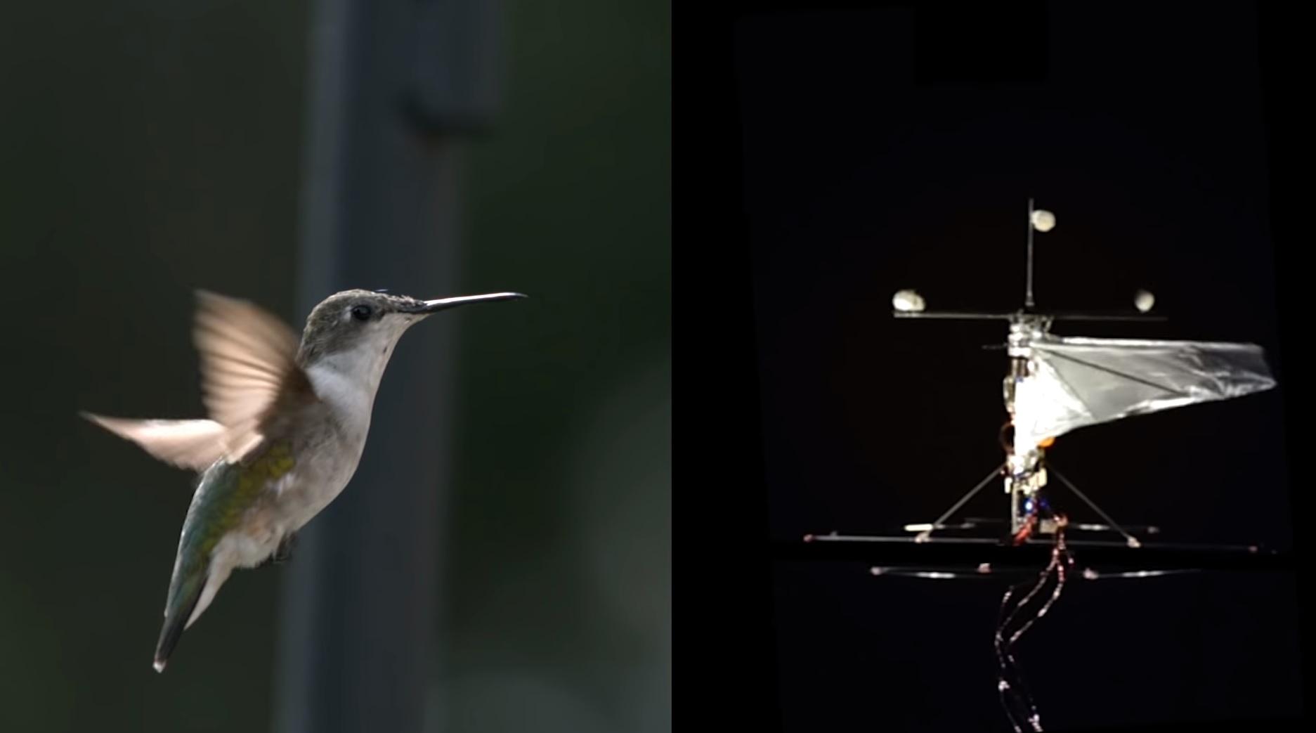 Dron v tvare kolibríka sa rozmermi a hybnosťou vyrovná originálu